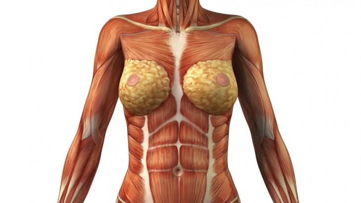 """Anatomie-Exkurs zum Thema der Woche """"Bauch"""" – Yoga by Kathi"""